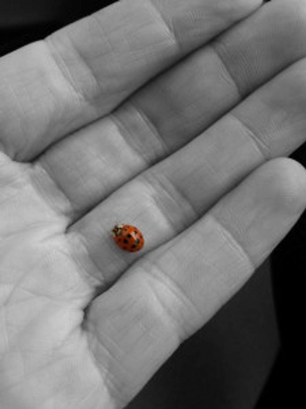 ladybug in hand bw red