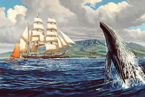 Whaler Sunbeam