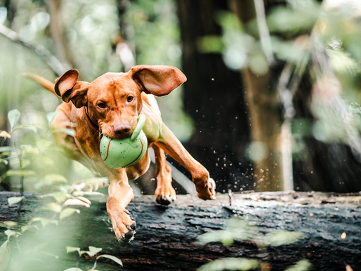 4 Tips to Keep Your Dog Safe This Summer