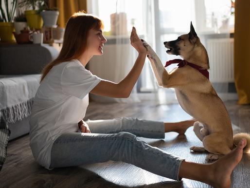 Kidney Health & Disease in Dogs