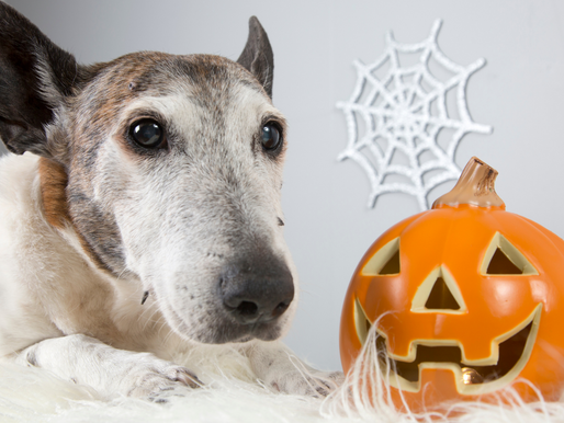 Halloween & Your Pup: 5 Safety Tips and Reminders
