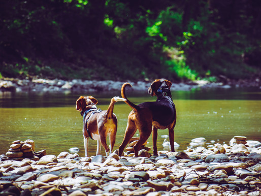 Protecting Your Pup From Pests