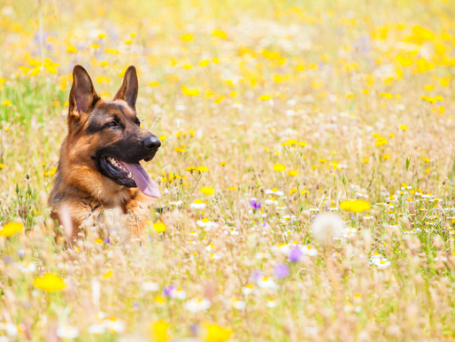 4 Easy Ways to be an Eco-Friendly Dog Parent