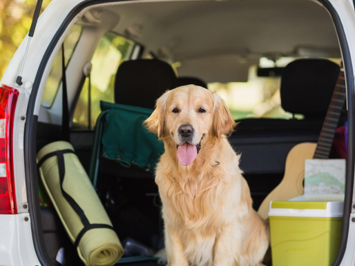 6 Travel Tips for Doggy Parents This Summer