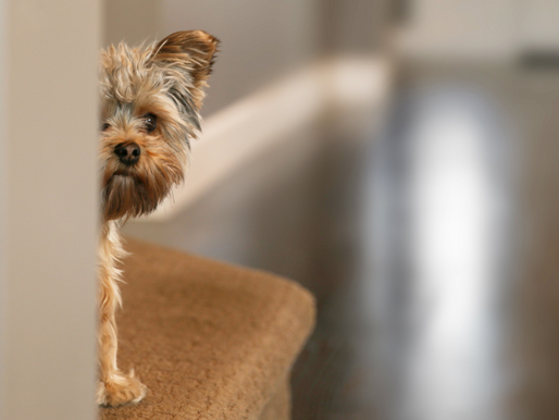 Dog Anxiety 6 Tips to Soothe Your Dog's Anxiety