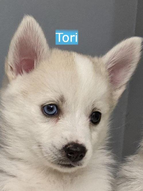 Tori Pomsky Female