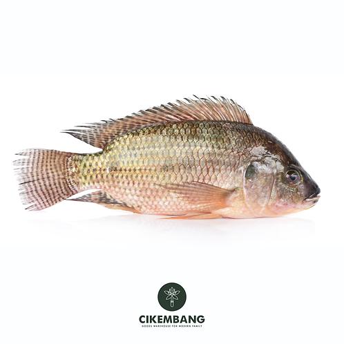 Ikan Nila Hitam 500 gr JKT