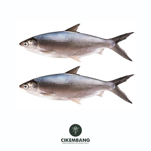 Ikan Bandeng 500 gr BDG