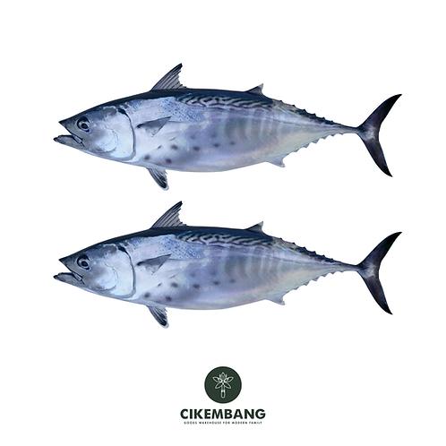 Ikan Tongkol 1 kg BDG