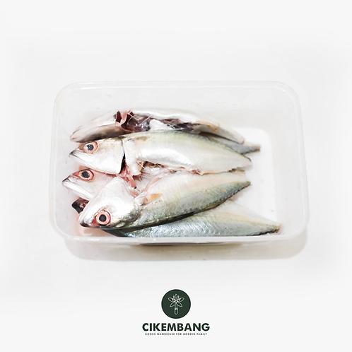 Ikan Kembung 500 gr BDG