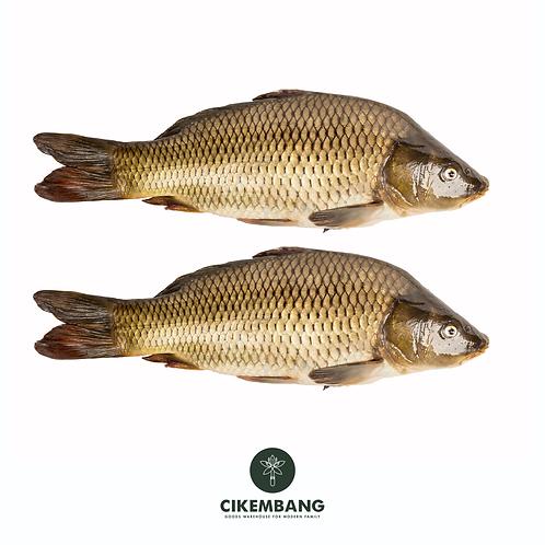 Ikan Gurame  500 gr BDG