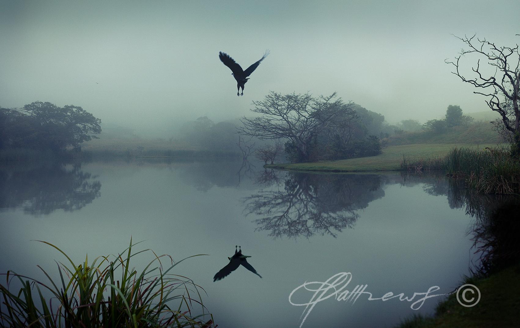 FISH-EAGLE-DAM
