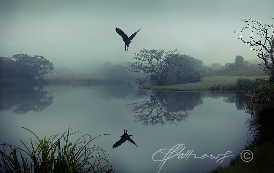 'Fish Eagle' - Photographic Print