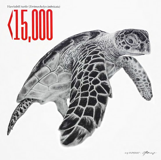 Hawksbill Turtle - Signed Limited Edition Print