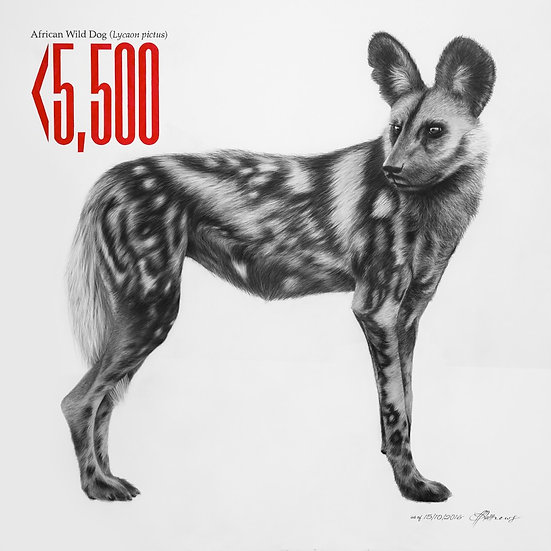 African Wild Dog - Signed Limited Edition Print