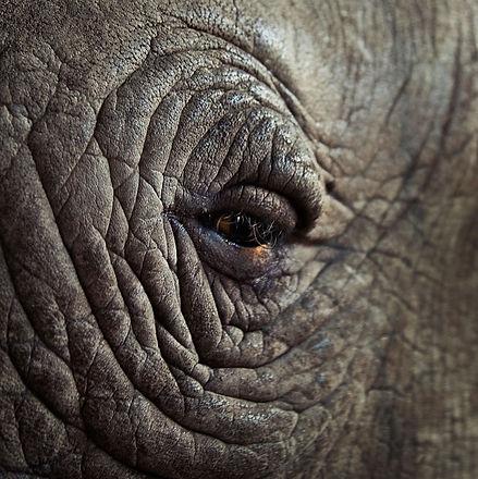 rhinos-eye.jpg