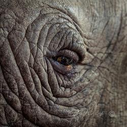 Rhino's-eye