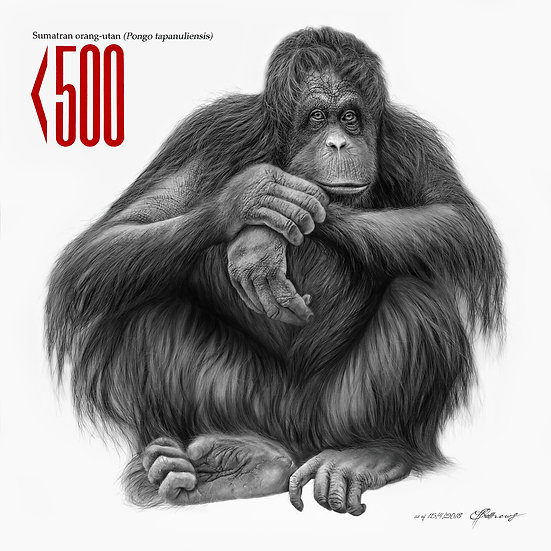 Sumatran (Tapanuli) Orangutan - Signed Limited Edition Print