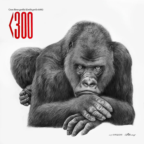 Cross River Gorilla - Signed Limited Edition Print