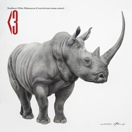 Northern White Rhino - Signed Limited Edition Print