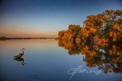 okavango-with-heron