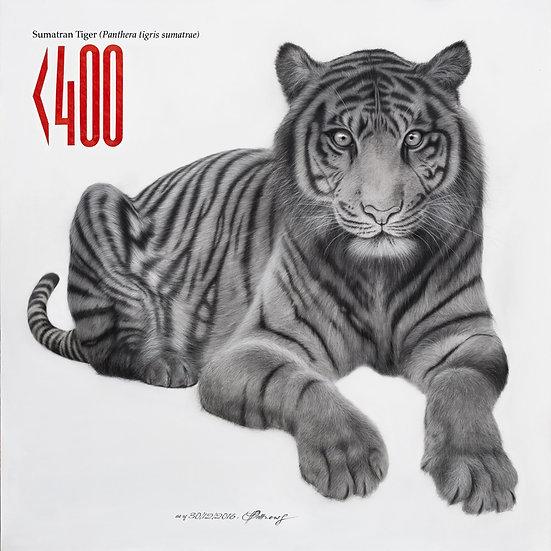 Sumatran Tiger - Signed Limited Edition Print