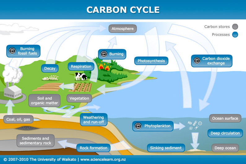 Carbon cycle.jpg
