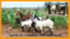 Leilão_Noca_e_Faz_Central_link_Página_03