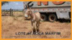 Lote 47 - N. Marfim.jpg