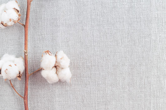 Cotton plant flower branch on grey fabri
