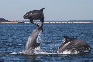 Passeio de Barco - Rota dos Golfinhos