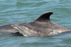 Dolphin Boat Tour _ Discover The Nature