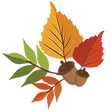 large_autumn-leaves-456.png