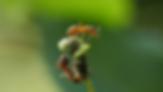 Screen Shot 2018-01-01 at 14.32.00.png