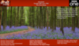 Bluebells_TXCard0.jpg
