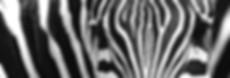 3U3A1605 (1).jpg