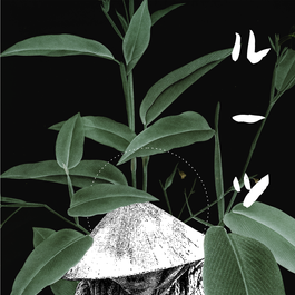 phytoessence - instagram 07.png