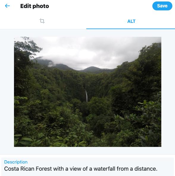 twitter photo of rainforest showing alt text description