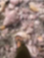 Schermafbeelding 2020-01-23 om 16.55.33.
