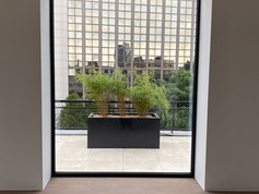 Miroir végétal.jpg