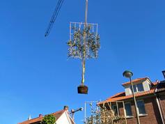Plantation arbre palissé.jpg