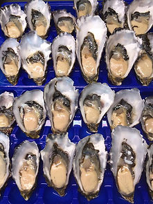 Freshly Shucked Pacific Oysters from Bla