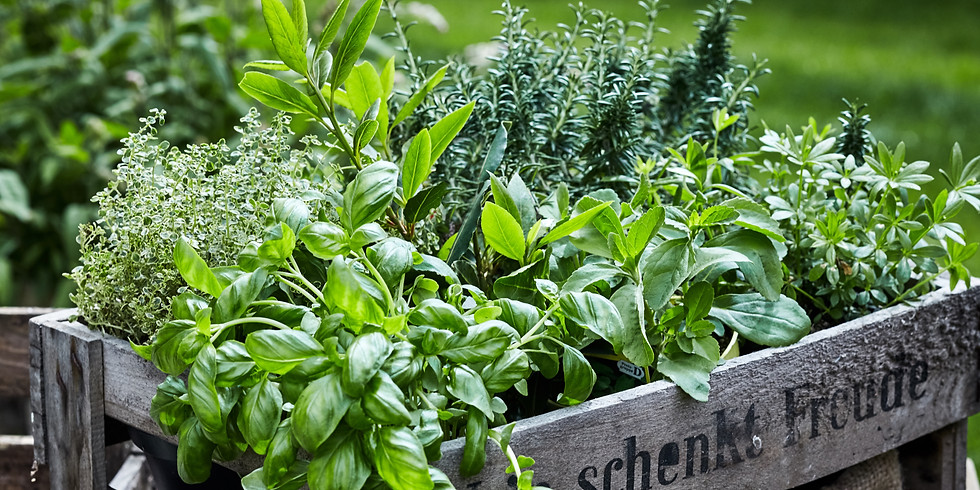 Így gondozd a fűszernövényeket