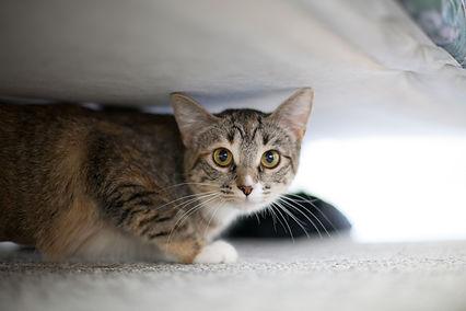 Cat_Moochie.jpg