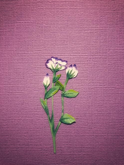 Flor de Eustoma.