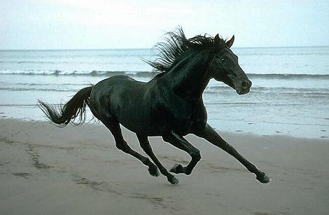 assurance chevaux pas chère