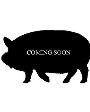 pig%20coming%20soon_edited.jpg