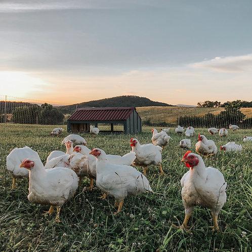 Pasture Raised | GMO Free Chicken Share