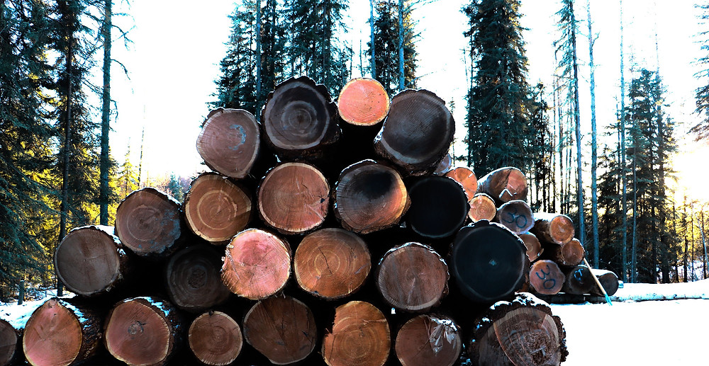A stack or pile of douglas fir logs waiting to be processed and milled and made into timber frame projects