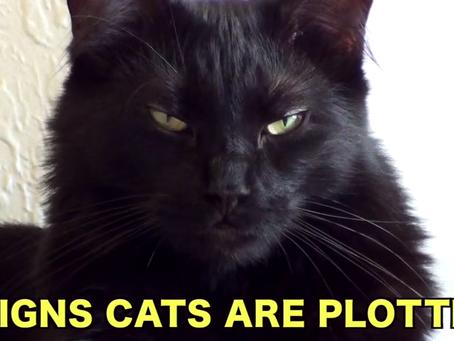 Gatos: ¿Amigos peluditos o infiltrados?